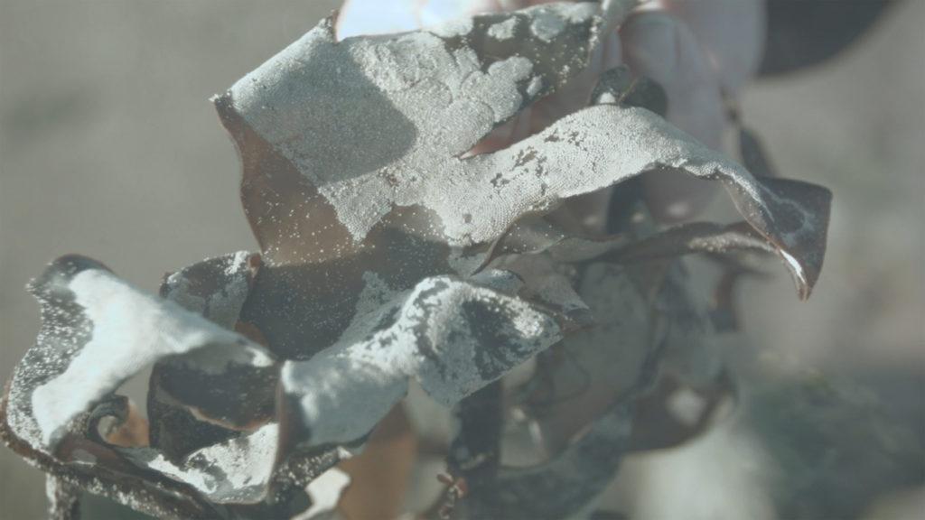 Sediments 02_300dpi